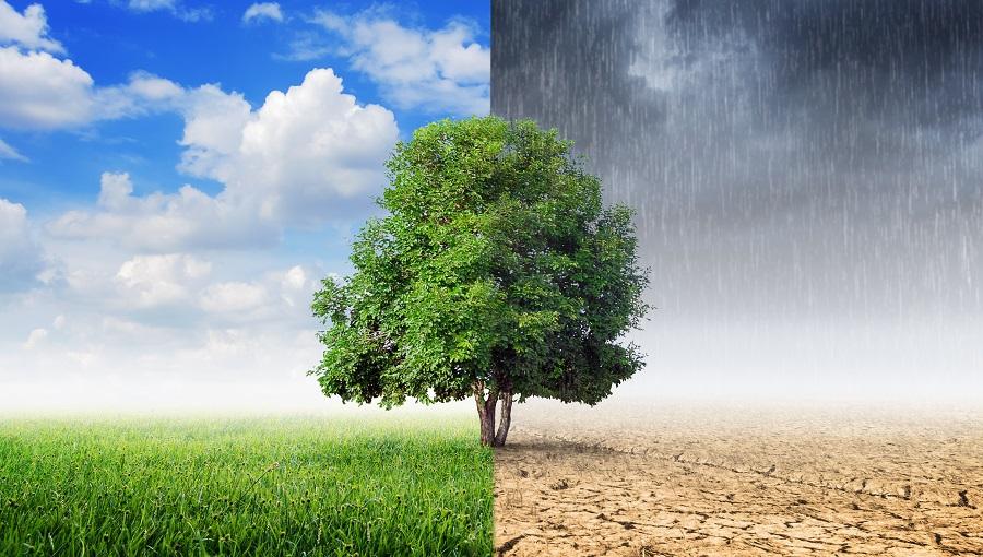 Climate API: Climate forecast for 30 days